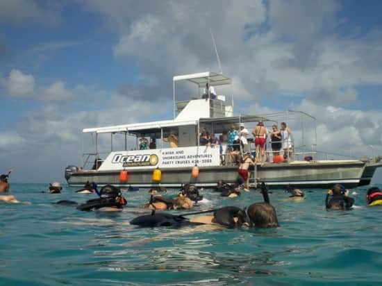 Explore The Beauty Of Caribbean: Swimming With Turtles In Barbados