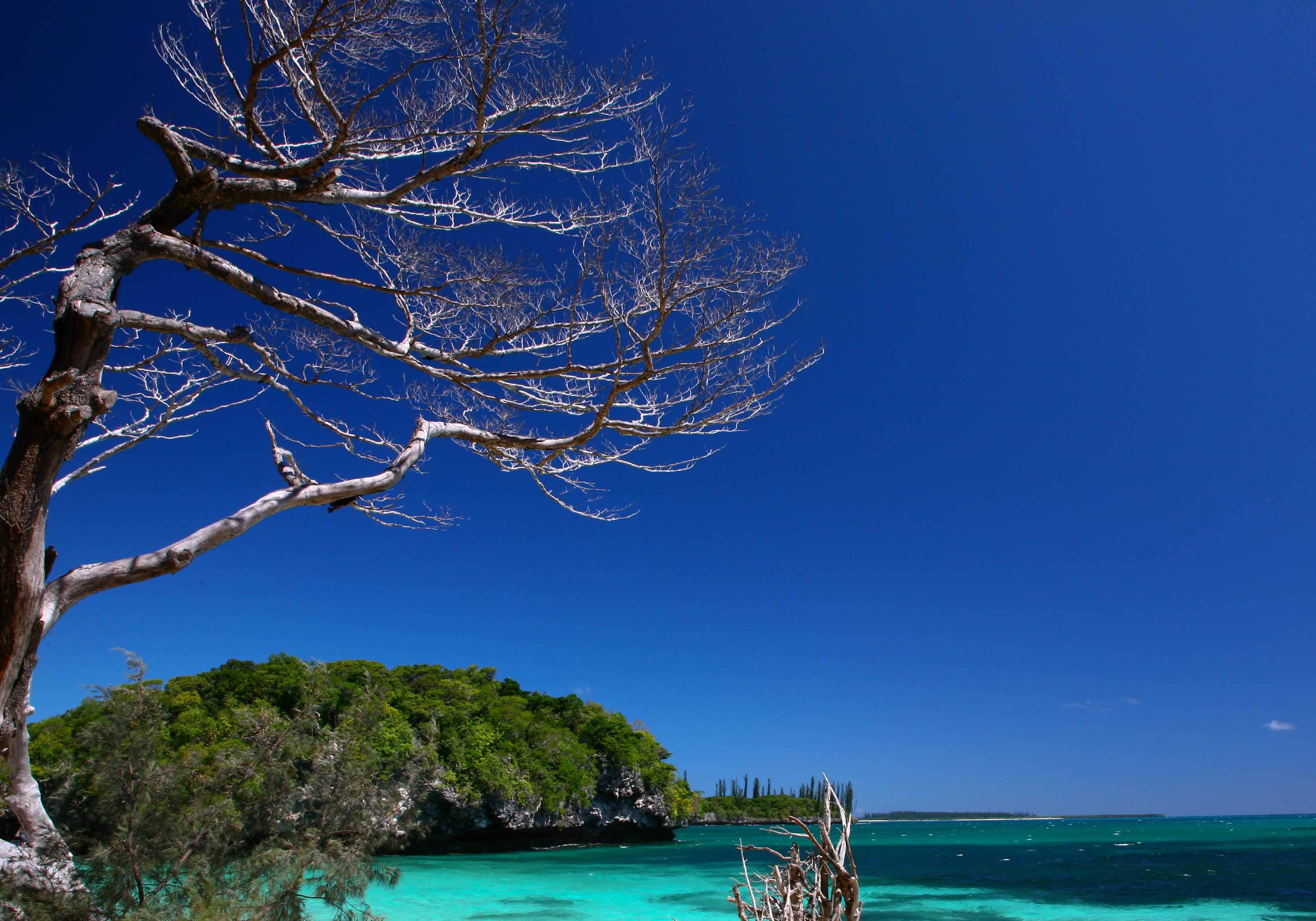 Ile Des Pins New Caledonia  city pictures gallery : Kuto, Ile des Pins, New Caledonia.