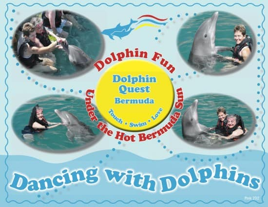 essays on dolphins