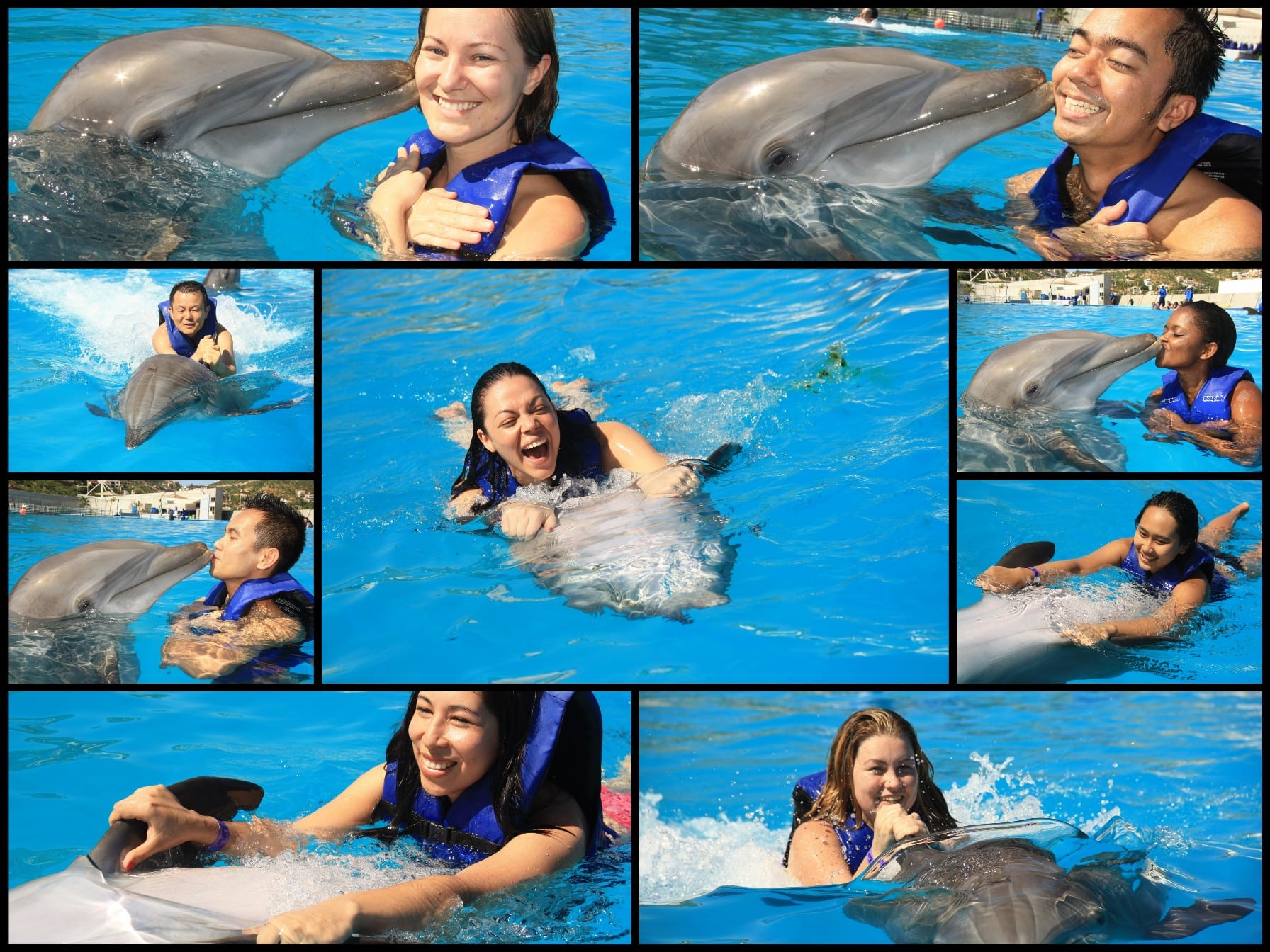 Explore The Beauty Of Caribbean: Statendam's Crew Go Swimming With The Dolphins