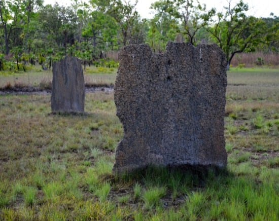 Magnetic Termite Mound. Some of them can be six feet tall.