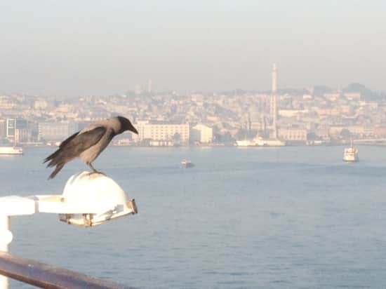 A free passenger enjoys the Istanbul view.