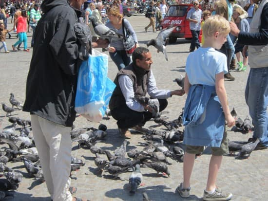 Pigeons on the Dam Square