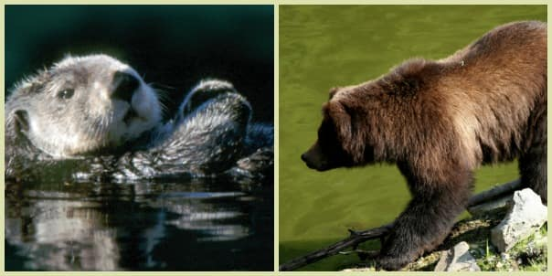 The Otters, Raptors & Bears - Oh My! tour.
