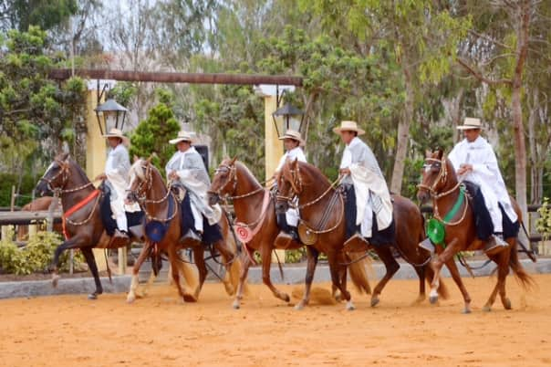 Peruvian Paso Horses and riders in traditional costume by Sharon Johnson.