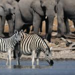 Looking for Adventure? Try an Exciting Cruise Around Africa