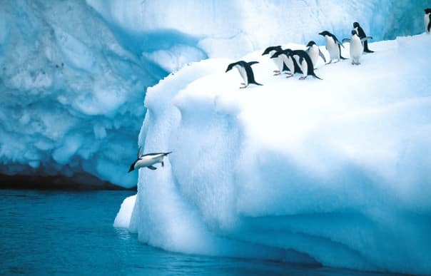 Penguins can be seen everywhere in Antarctica.