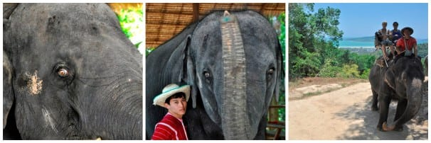 Elephant riding in Phuket. Photos by Joanne Gardner.