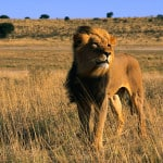 Cruise Around Africa with Exotic Air Savings