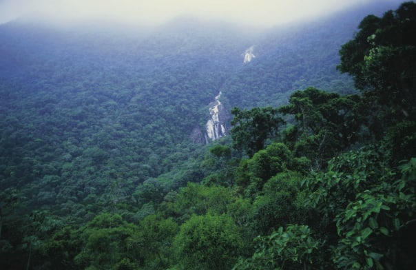 With a variety of different species of trees and gorgeous natural waterfalls, there is something new to be seen with every turn on a  hike through the Amazon.