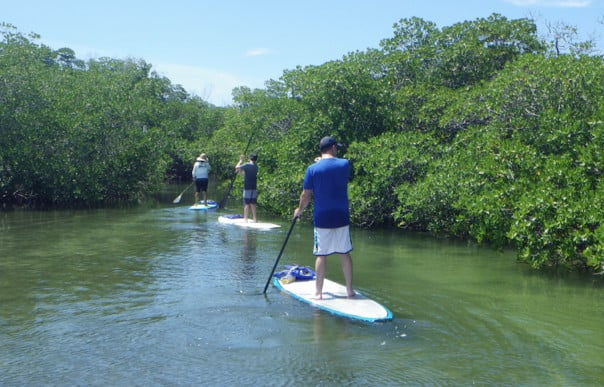 The paddleboard tour in Key West explores the beautiful mangroves. Photo courtesy of Lazy Dog tour operator.