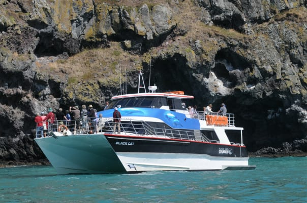 Guests get to explore an MPA on the tour to the Akaroa Marine Reserve in New Zealand.