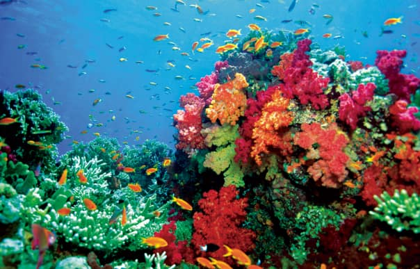 On land or from the sea, the beauty of the South Pacific is unmatched.