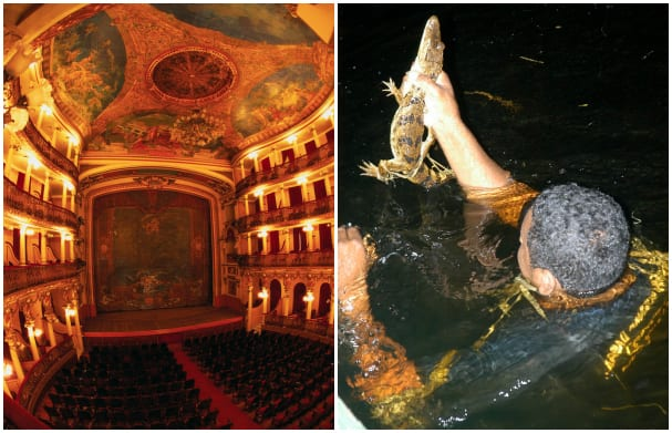 Enjoy the stunning theater or watch your guide dive into the water to catch alligators at Manaus.