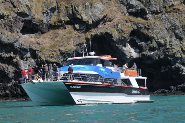 Look out for the Hector's dolphin on a tour through Akaroa Harbor.