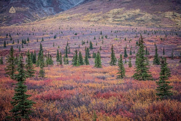 This was taken from the train on the Double Denali Cruise! Actual colors of September...no touch up! — Rick Sweeney