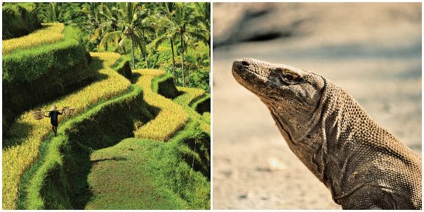 Bali's lush landscapes and Komodo Island's dragon await on the Australia circumnavigation.