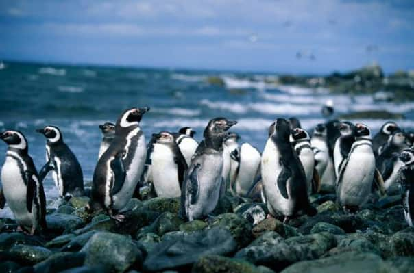 Magdalena Island is home to Magellan penguins.