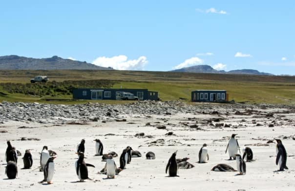 The Blue Cove Penguin Rookery.