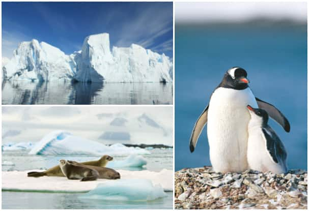 Positioning cruises and Collectors' Voyages let guests discover Antarctica's beauty with only one international flight.