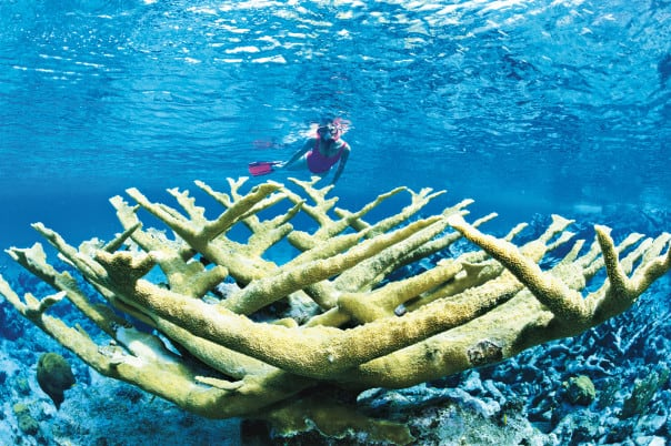 Discover Grand Turk's underwater life on a Caribbean cruise.