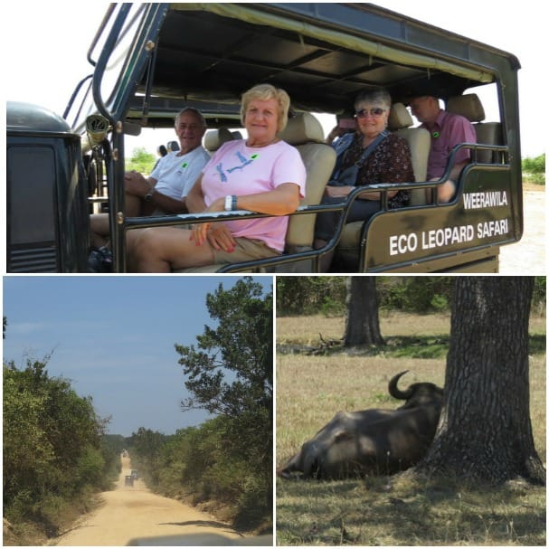 The Yetkes went in search of wildlife on their tour.