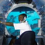 Explore Under the Sea Without Getting Wet on a Submarine Shore Excursion