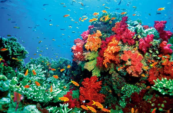 The waters of the South Pacific are a diver's paradise.