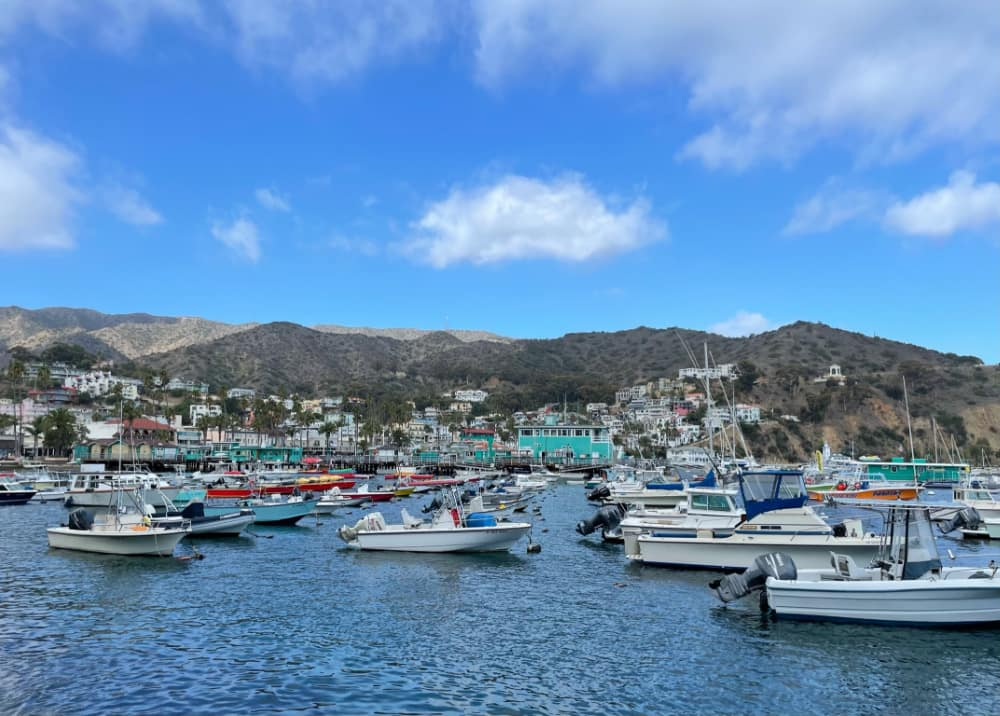 boats in the port of Avalon