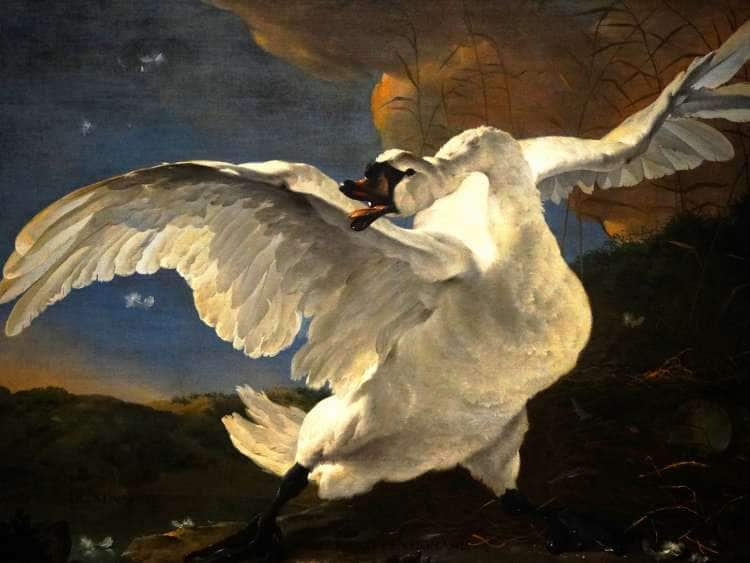 Image result for Rijksmuseum at Sea swan