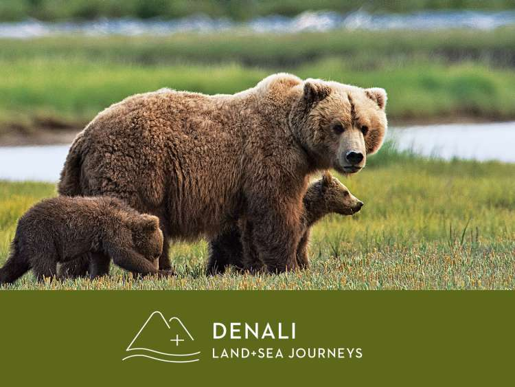 Denali: Land and sea journeys