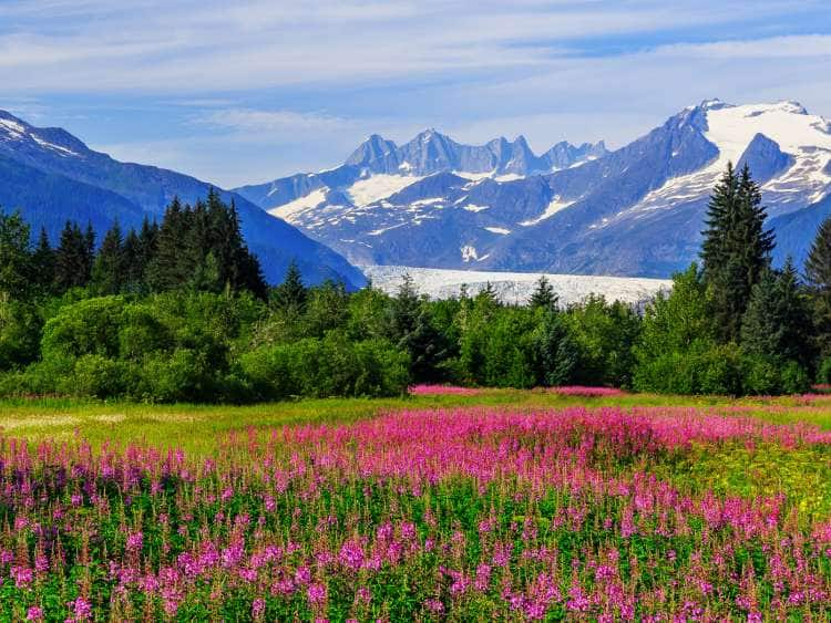 meadow with flowers, Alaska