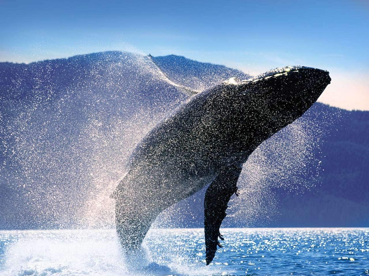 Whale watching on an Alaska cruise