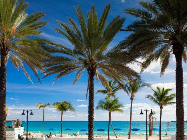 A sunny beach with palm trees in Fort Lauderdale, Florida.