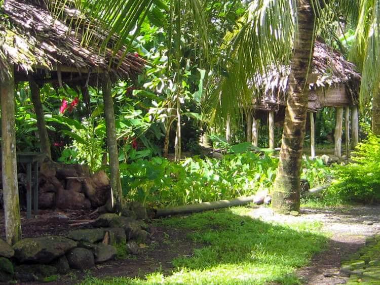 A Taste of Samoan Village Life