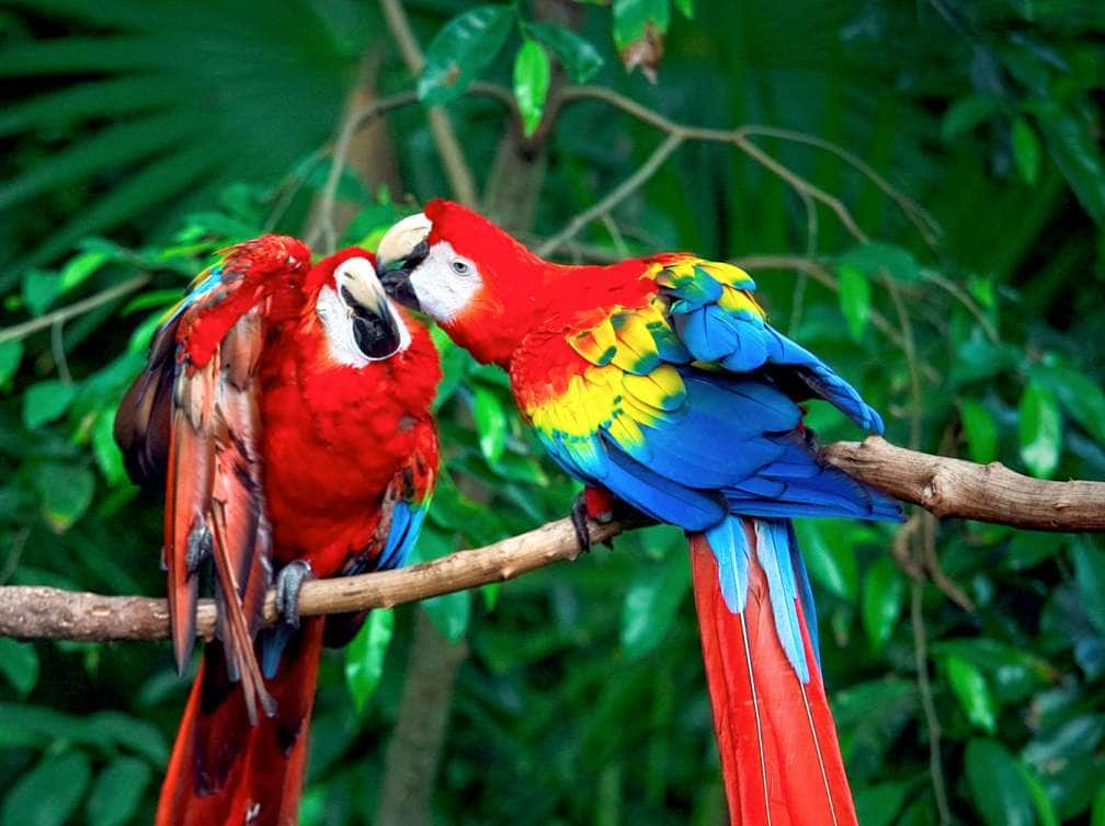Two parrots perched on a branch