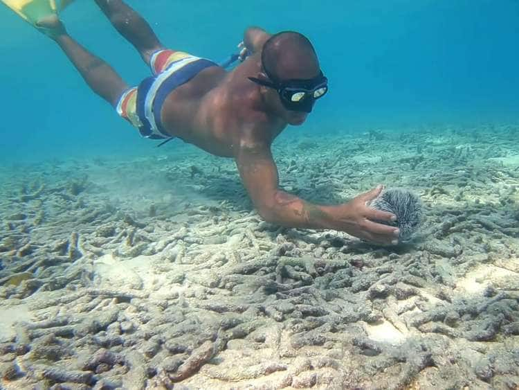 Picture of Chef Taki snorkeling and looking for ingredients to cook with on an Aruba cruise