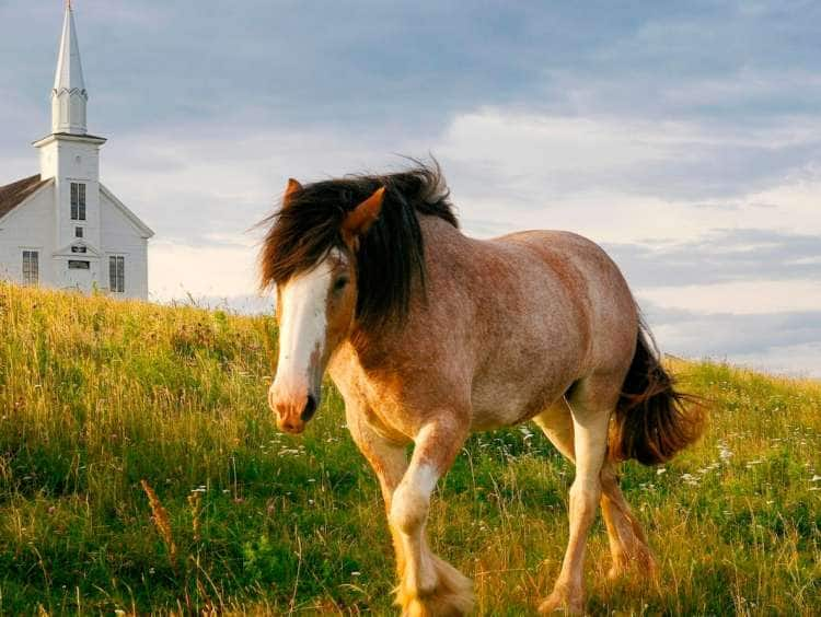 A picture of a horse in Sydney, Nova Scotia, Canada while on a Canada cruise excursion