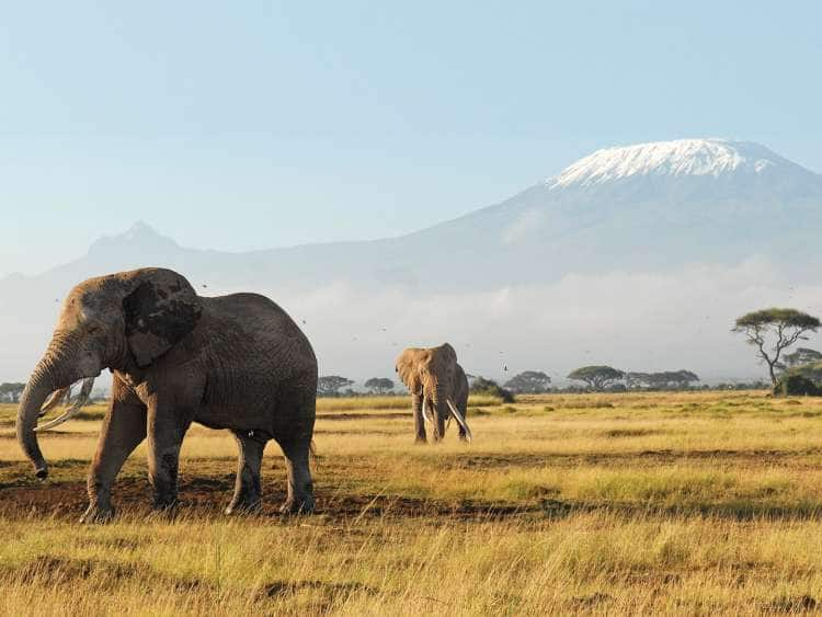 View of two elephants on an African plain seen on a world cruise
