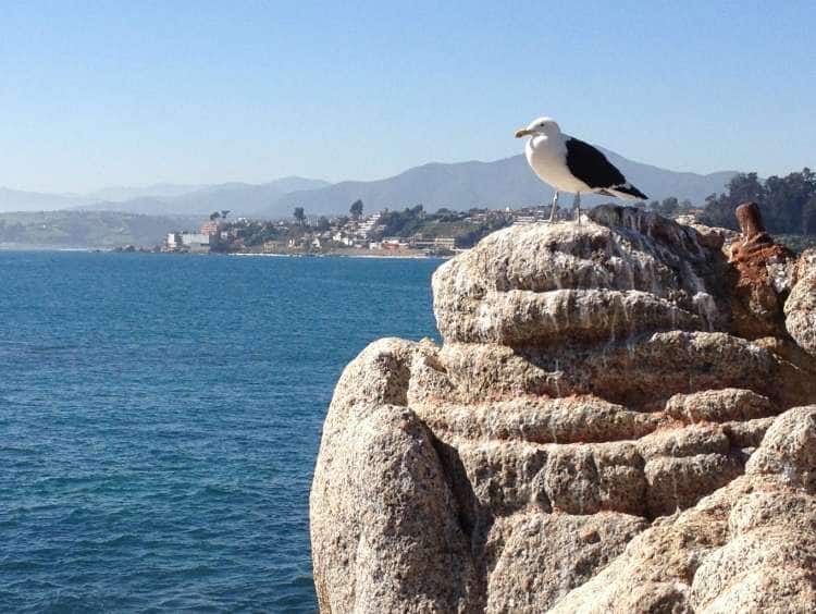 A seagull overlooking the water with San Antonio (Santiago), Chile in the background while on a cruise to South America