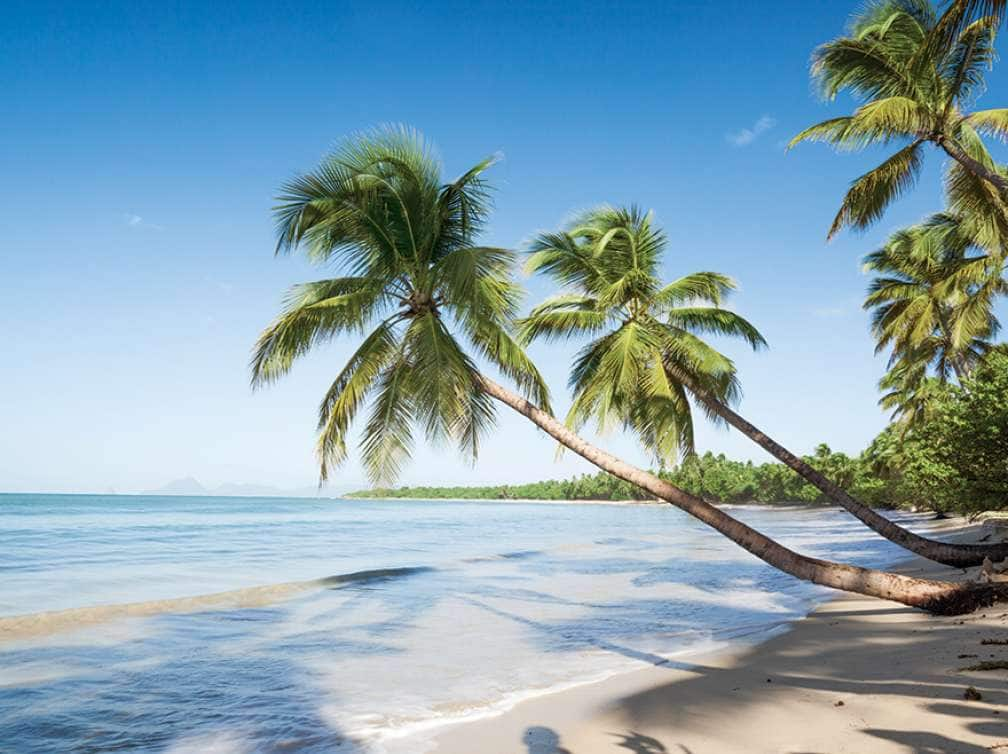 A Caribbean cruise deal can give you a view of Palm trees overlooking a beach in the Caribbean