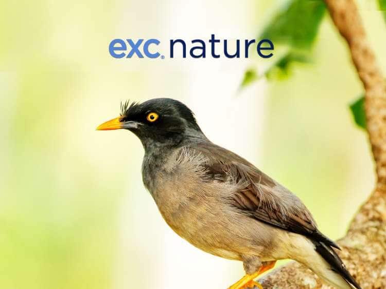 EXC Nature